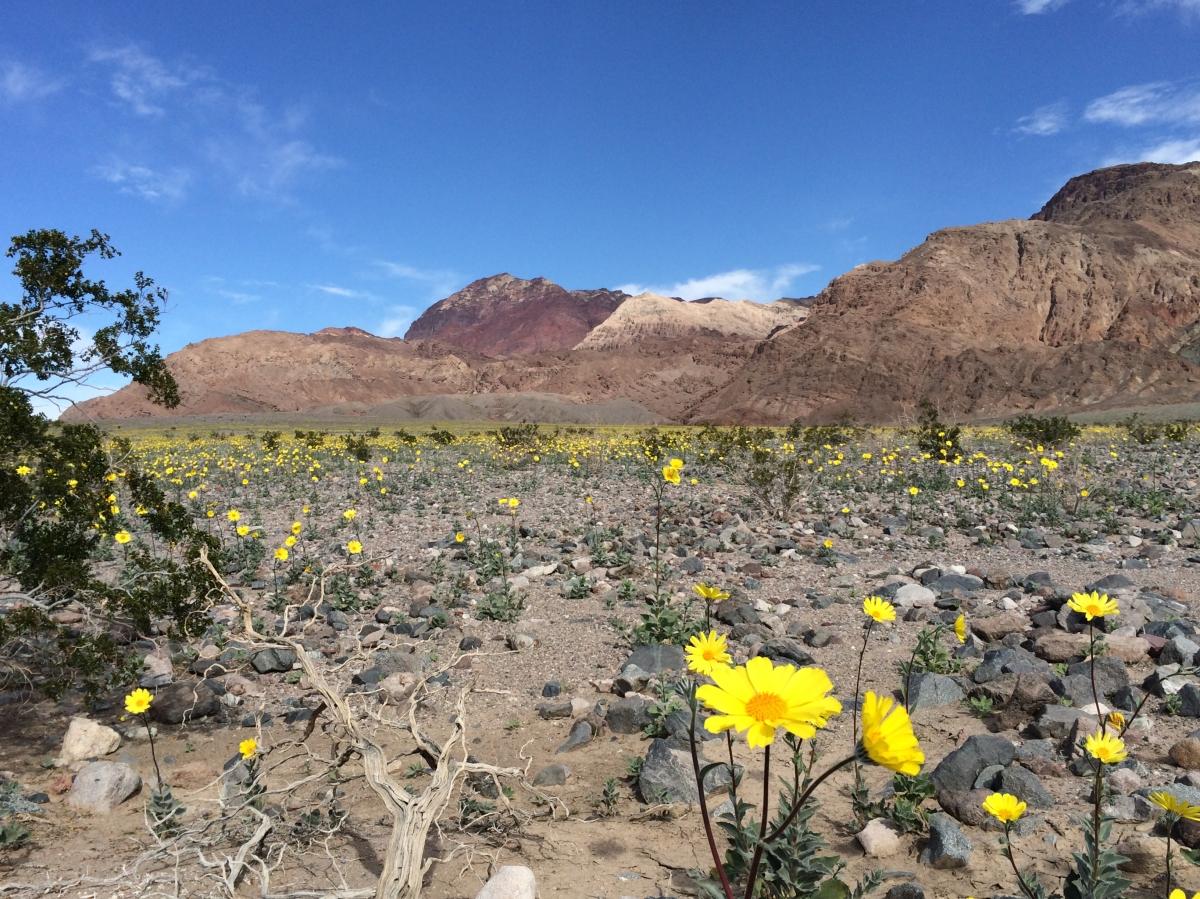desert_gold